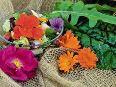 Essbare Blüten - wir sagen welche