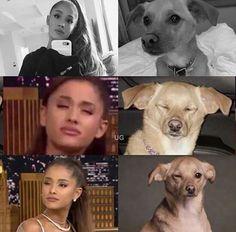 Ariana Grande and cute dog