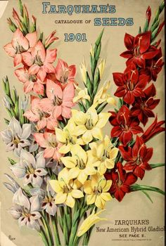 1901 - Farquhar's catalogue of seeds 1901 : - Biodiversity Heritage Library. #BHLinbloom