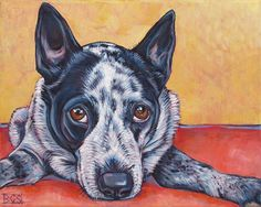 Charlie the Australian Cattle Dog (Blue Heeler)