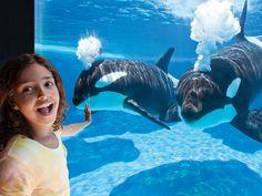 Shamu Underwater Viewing | SeaWorld Orlando