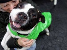 """Manhattan Center SNOOP aka POLYJUICE - A0995911 *** RETURNED ON 3/14/15 - """"MOVING"""" *** NEUTERED MALE, BLACK / WHITE, AMERICAN STAFF MIX, 2 yrs, 11 mos OWNER SUR - EVALUATE, HOLD RELEASED Reason MOVE2PRIVA Intake condition UNSPECIFIE Intake Date 03/14/2015 https://www.facebook.com/photo.php?fbid=979187428760803"""