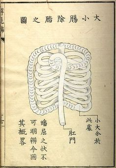 Kaishi Hen, an 18th Century Japanese anatomical atlas   The Public Domain Review