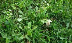 Guarda un filo d'erba al vento e sentiti come lui. Ti passerà anche la rabbia. T.Terzani Il fiore si nasconde nell'erba, ma il vento sparge il suo profumo. Tagore Oggi lasci…