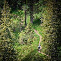 A mountain bikers dream: flowy singletrails on soft forest soil.  Rider: @schneeevi  Cam: @sonyalpha #sonyalpha99ii & #sony70200 . . . . . . . #cyclingphotos#stravacycling#rideinstyle #cyclingpics#cyclist#bikestagram #instacycling#lovecycling#cyclinglove #instabicycle#cyclistlife#outsideisfree #rideyourbike#getoutside #bicycles#bikes #fromwhereiride #enduro #mtb #cycling #freeride #WYMTM #lightbro #dolomites #specializedde #specializedambassador #mountainbikeratklagenfurt