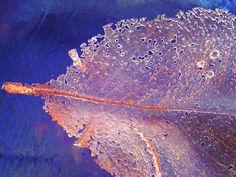 Judith Bohm-Parr's delicate pink pate de verre( literally translated glass paste) leaf skeleton