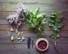"""Nature collection, lilac flowers nature photography still life photograph purple green dark brown wood rustic wall art """"Collection Four"""""""