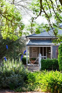 Some of the loveliest gardens is Evandale, in SA. plantings of echium, succulents and agapanthus producing a symphony of greens. Popping out of the echium are steel rods topped with blue bottles. Australian Garden Design, Australian Native Garden, Australian Homes, Australian Architecture, Home Garden Design, Home And Garden, Patio Design, House Design, Cottage In The Woods