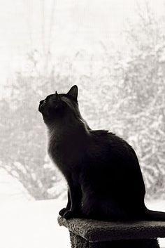 Black cat...  wistful