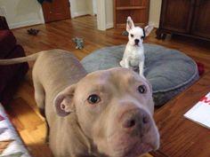 Sugar and Spike. best buddies!