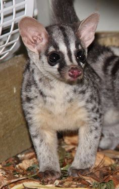 Is there a civet in yo...