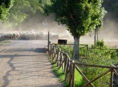 Caffarella Park - fietsen in Rome