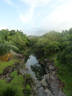 Botanical garden, Caguas, Puerto Rico | La Beℓℓe ℳystère