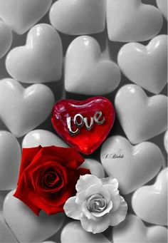 Phi Let us therefore, as many as be perfect, be thus minded: and if in any thing ye be otherwise minded, God shall reveal even this unto you. I Love Heart, Love Rose, Heart Wallpaper, Love Wallpaper, Beautiful Nature Scenes, Beautiful Roses, Hearts And Roses, Red Roses, Whisper Love
