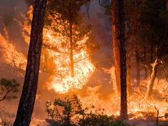 Raquella's Forest -- Forest Fire