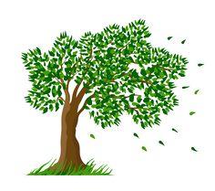 árvore com folhas caindo 3
