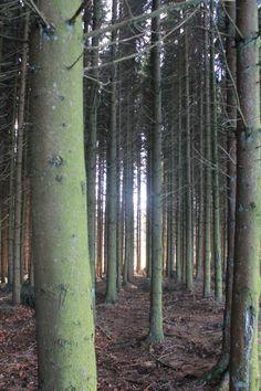 Belgium Forrest