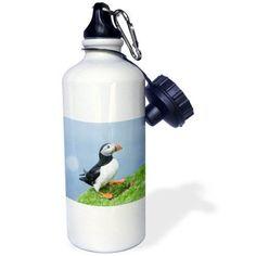 3dRose Atlantic Puffin on cliff. Shetland Islands, Scotland., Sports Water Bottle, 21oz