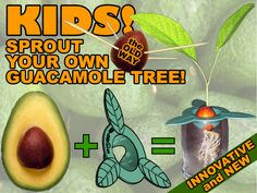 Edu-CADO™ Gadget Sprouts Avocado Pits WITHOUT Toothpicks