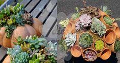 Anote essa dica de jardinagem impressionante!