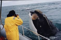 I really want to go whale watching. I think this is going to get crossed off my bucket list this summer! I know that I am prolly going to scream my head off though if one ever came this close!