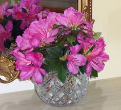 Beautiful arrangement of fresh azeleas from our yard.