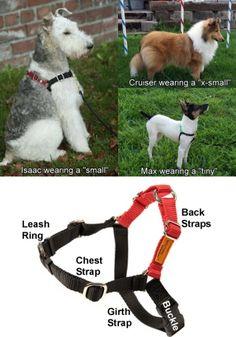 Wonder Walker dog harness - no more pulling on the leash. Works like a charm!
