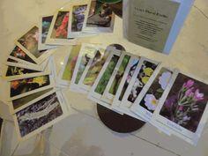 florais de bach jogo 40 cartas cards sem texto p/ dinâmicas