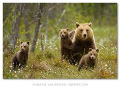 bear family- Bobbie liked this one.