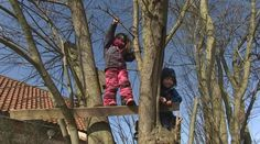 Children playing in trees at the Dandelion nursery