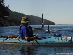 Kayak with Killer Whales - Spirit of the West Kayaking with Killer Whales