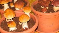 Most people who go in for mushroom growing just go out and buy both the spores (or spawn) and the growth medium. They do this because this is the easiest way to grow mushrooms. But if you are thinking of growing mushrooms commercially Porcini Mushrooms, Stuffed Mushrooms, Container Gardening, Gardening Tips, Culture Champignon, Household Plants, Growing Mushrooms, Hydroponics, Permaculture
