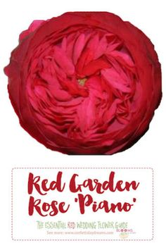 The search for red wedding flowers is officially over! In this extensive guide for maroon, burgundy and red weddings, we share the names and types of red wedding flowers with pretty pictures. Wedding Flower Pictures, Wedding Flower Guide, Wedding Flower Inspiration, Flower Ideas, Rustic Red Wedding, Burgundy Wedding Flowers, Red Flowers, Red Wedding Receptions, Types Of Red
