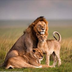 Gorgeous Family Portrait. How could anyone look at photos like this and not afford these animals all the protection, care and dignity we wish for ourselves?