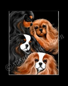 Cavalier King Charles Spaniel print. #dogs #animal #king #charles