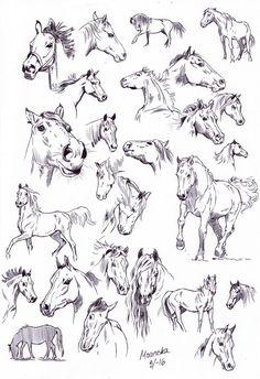 Ballpoint pen sketches by nillamustikka horses in 2019 эскиз Pen Sketch, Drawing Sketches, Drawing Tips, Horse Drawings, Animal Drawings, Horse Drawing Tutorial, Horse Sketch, Horse Anatomy, Horse Illustration