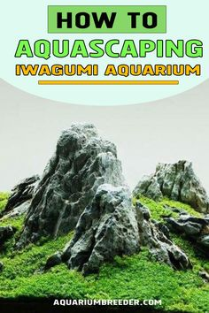 Iwagumi is a technique that involves the placement of two or more stones in order to create an attractive composition in the aquarium. Different Plants, Aquascaping, Snail, Shrimp, Composition, Aquarium, Beautiful Pictures, Fish Stand, Fish Tank