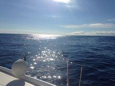 #monaco #boat #catamaran