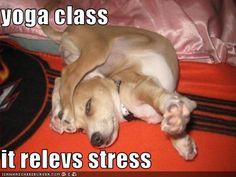 master yogi puppeh!