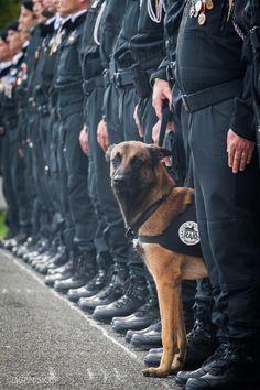 VIDEOS. Saint-Denis : l'hommage de la police au chien du Raid tué durant l'assaut.........DIESEL , MALINOIS DE 7 ANS , CHIENNE D'ASSAUT DU R.A.I.D. A ÉTÉ TUÉE PAR LES TERRORISTES ALORS QU'ELLE PÉNÉTRAIT LE LIEU DE L'ATTAQUE , DANS L'OPÉRATION EN COURS A SAINT - DENIS LE MERCREDI 18 NOVEMBRE 2015.LES FORCES DE POLICE L'AVAIENT FAIT ENTRER DANS L'APPARTEMENT POUR JAUGER LA MENACE A L'INTÉRIEUR..............
