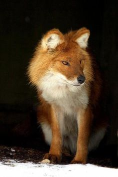 FOXES are most active at night, but also are day animals. By affinity with the animal totem, you may like to be active and bring your creativity to its peak during night time as it gives you the space to be closer to your natural state. --- http://www.spiritanimal.info/fox-spirit-animal/