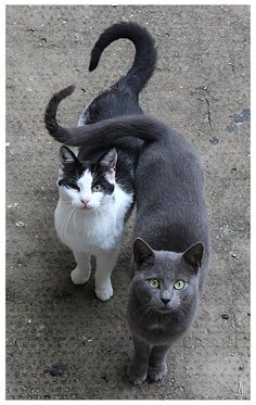 by *jankolas  - love it when cats hug with their tails.