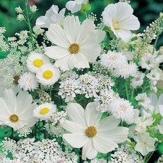 Whimsical Raindrop Cottage, flowersgardenlove: White garden Flowers Garden...