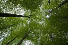 Green Sky by Jonny Kopp on 500px