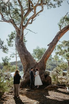 Intimate Lakeside Elopement in Tasmania | Photography by Who Shot The Photographer Twilight Photos, Australian Bush, Outdoor Baths, Window View, Portugal Travel, Ceremony Backdrop, Arbors, Tasmania, Photojournalism