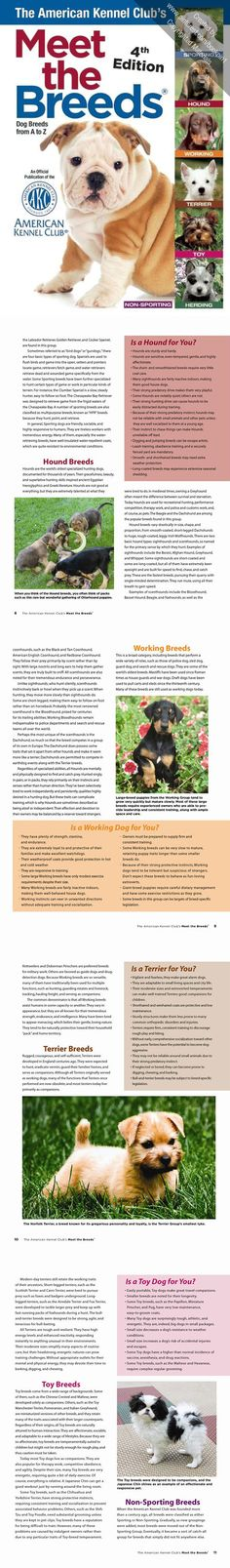 """""""The American Kennel Club's Meet the Breeds"""" now presents profiles and photographs of 199 breeds, representing every AKC-recognized breed."""