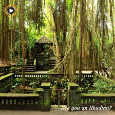 Are you an Ubudian? Lovely ubud and especially its jungle surroundings! Nothing better to escape and lose yourself in beauty! #bali