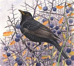 'In from the mist, first year Blackbird and Sloes'by Richard Allen