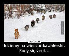 Demotywatory / Memy | Potworek.com Very Funny Memes, Funny Animals, Weird, Geek Stuff, Marvel, Snow, Humor, Disney, Poster