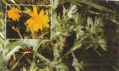 Σημιλλούδι, Καντζηλάρης Γ. (2007) 277. Cyprus Food, Virtual Museum, Plants, Painting, Art, Art Background, Painting Art, Kunst, Paintings